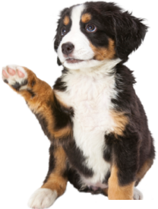 cucciolo[1]